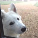 """Le chien """"en peluche"""" des propriétaires"""
